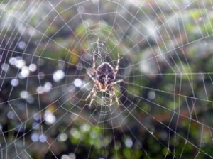 Spider_vdg