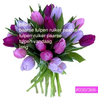 zoombouquet_rond_tulipe_rose_violet_parme_reve_de_tulipes_oqj3