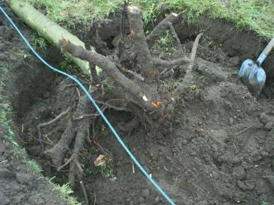boomverwijderen3