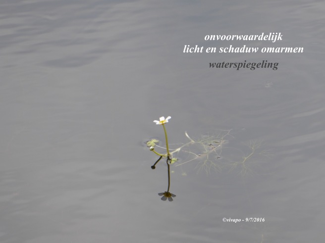 haiku-waterspiegeling