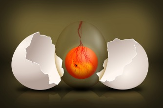 embryo-544192_960_720